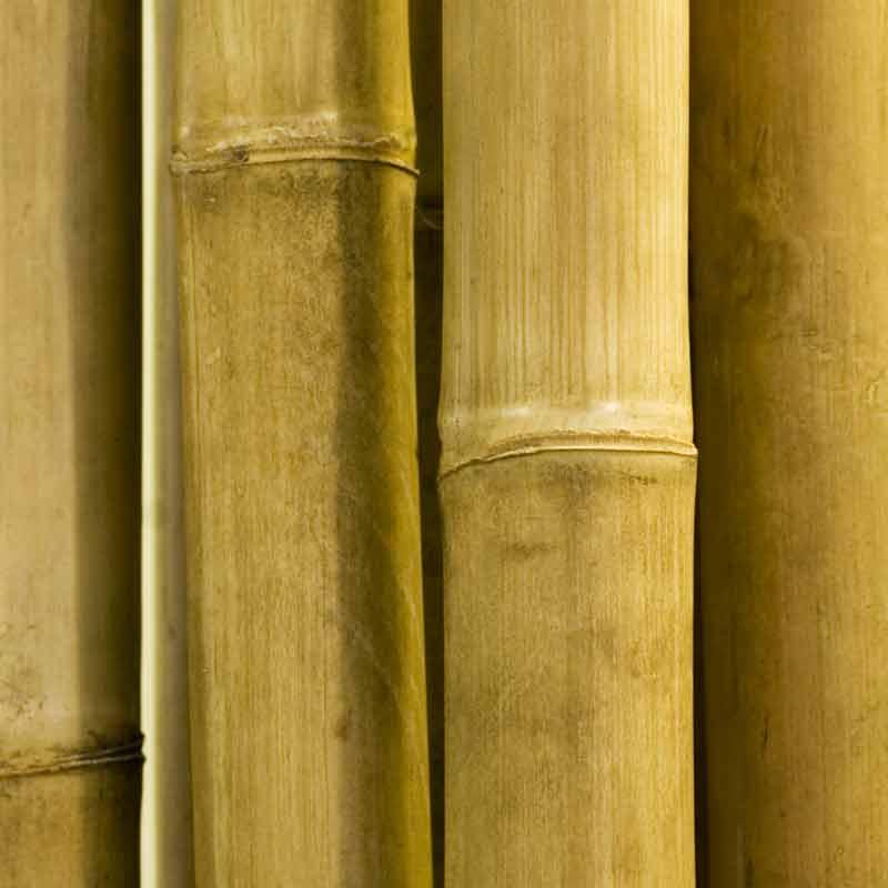Collection de papier peint Multilés BAMBU – Réf. BU2508 par LGD01