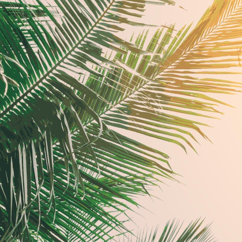 Collection de papier peint Multilés PALM SOLIS – Réf. PS0612 par LGD01