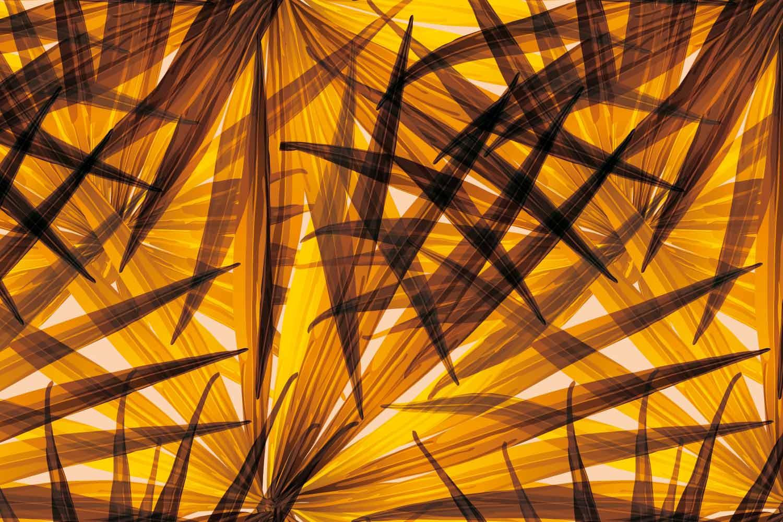 Collection de papier peint Multilés TROPICAL – Réf. TR6455 par LGD01